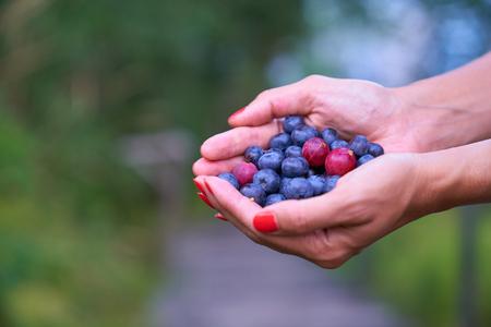 Fresh highbush blueberries and gooseberries on female hands in outdoors settings in Finland.