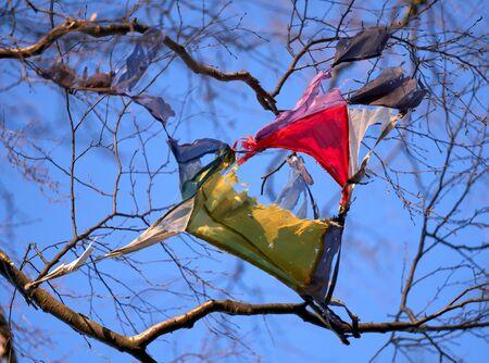 Broken colourful kite stuck in the birch tree in Helsinki, Finland