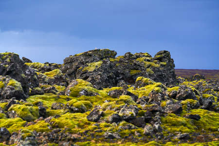 Green moss growing on volcanic rocks in Snaefellsnes peninsula Western Iceland on overcast day in early October 2020. Standard-Bild