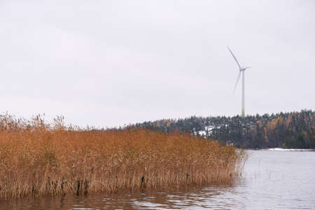Tall wind power turbine and yellow reeds by the Baltic Sea in the Southern coast of Finland on a cold October afternoon in 2017.