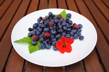 Plateful of fresh Finnish blueberries, gooseberries and black currant served on a white plate on a wooden table with green black currant leafs and red flower for decoration. Standard-Bild