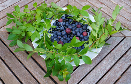 Plateful of fresh Finnish blueberries, gooseberries and black currant served on a white plate on a wooden table with wreath of green blueberry leafs for decoration.