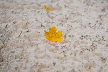 Yellow maple leaf floating on top of dirty foam in water of Mätäjoki river in Helsinki, Finland