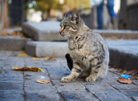 Stray cat in the street of old town Tbilisi, Georgia on Autumn day in November 2018.
