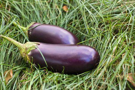 Eggplants in grass Stock Photo