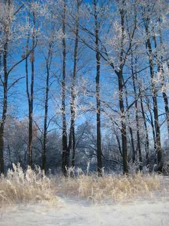 winter landscape and blue sky Stock Photo - 5655384