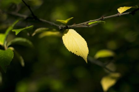 yellow leaf on a branch in a garden Stock Photo