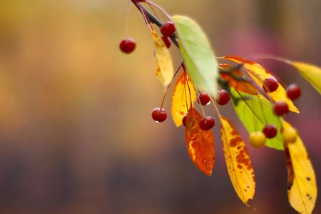 red berry on a branch of a tree in autumn