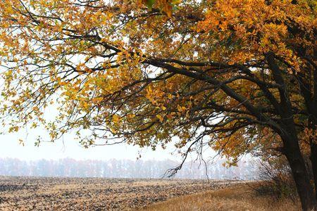 bright oak tree in a field