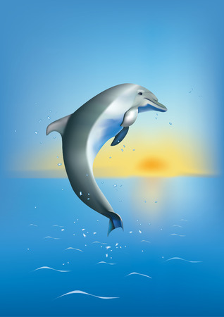 a dolphin diving in the sea on background og sunset