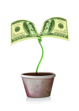 100 dollars banknots sprout cultivated in a pot Stock Photo
