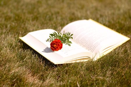 an open book with a flower on it in grass