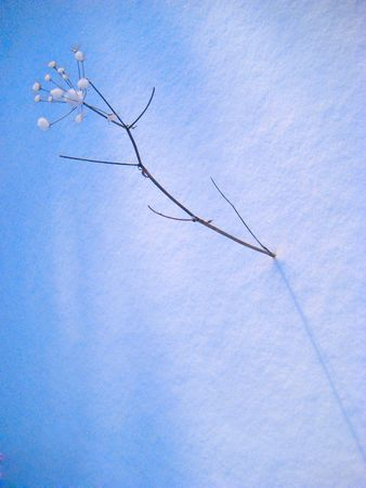 winter plant in a blue snow in winter