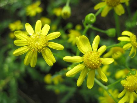 beautiful fresh yellow summer florwers in grass Stock Photo