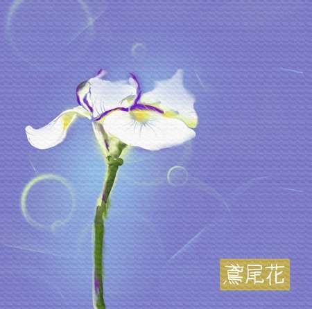 ideogram: white iris flower japanese watercolor on blue background