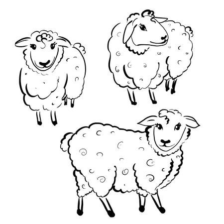 animal watching: three white sheeps on white background Stock Photo