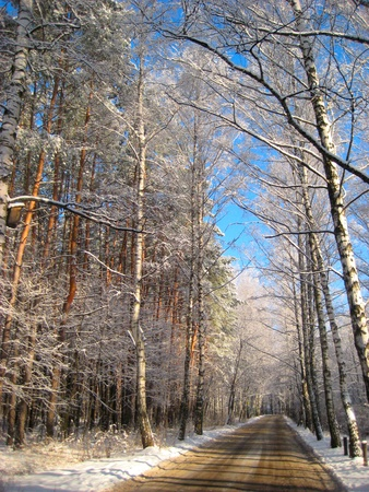 bright sunny winter day in a forest