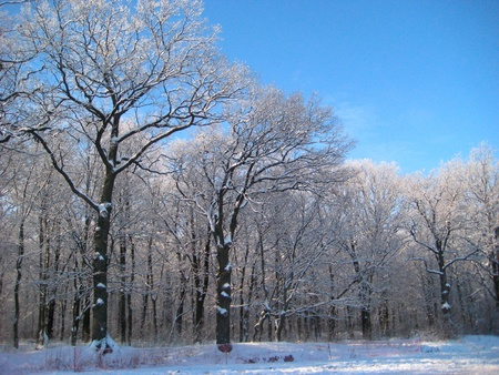 bright sunny winter day in a forest Stock Photo - 8658901