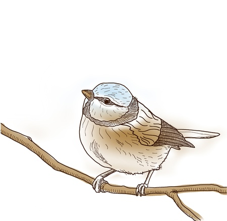 Pencil drawn and painted lonely bird