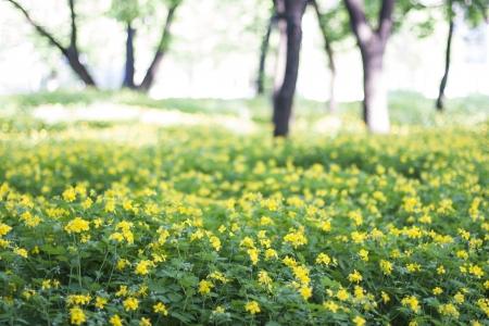 yellow summer flower in garden Stock Photo - 19551109