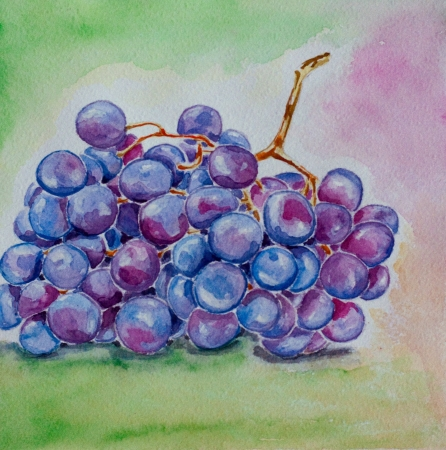blue ripe grape watercolor on green background