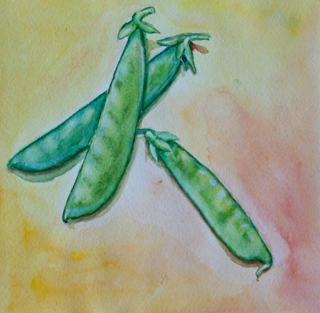 green pea watercolor on abstact background Stock Photo - 21145555