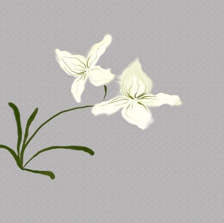 orchidées blanches de peinture d'aquarelle de même japonais
