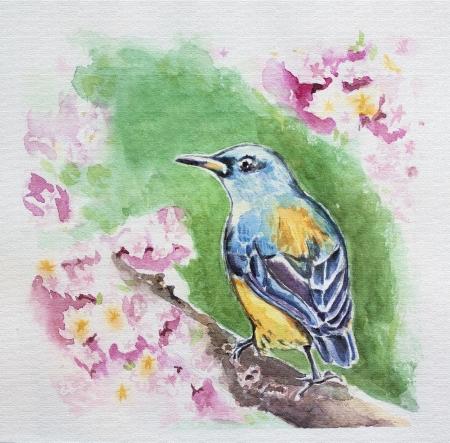 spring bird at blossom branch watercolor