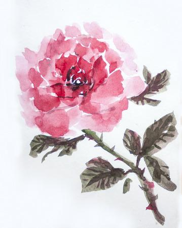 asaisn rose. Chinese watercolor