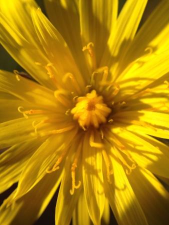 혼자 노란 꽃