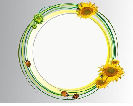 sunflower sunflower photo