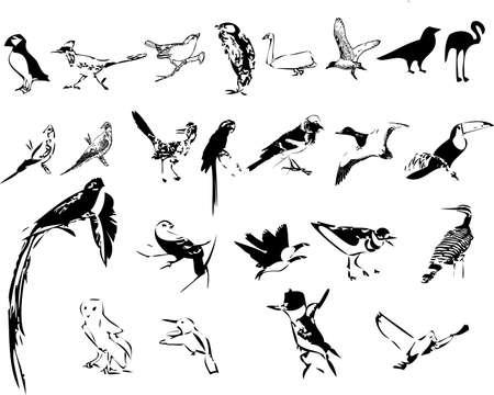 pigeon owl: Birds silhouettes