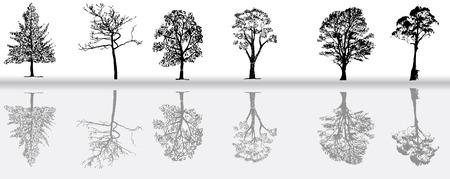 coniferous forest: Siluetas de �rboles Vectores