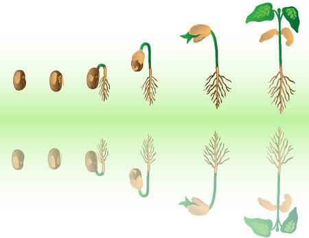 germinaci�n: Planta que crece