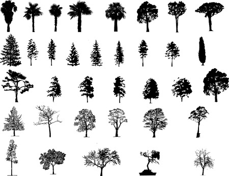 botanical branch: Tree  silhouettes  Illustration