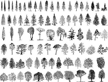 for�t r�sineux: Silhouettes d'arbres