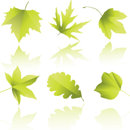 feuille de vigne: Silhouettes de feuilles Illustration