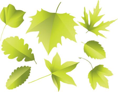 ash tree: Silhouettes of leaves Illustration