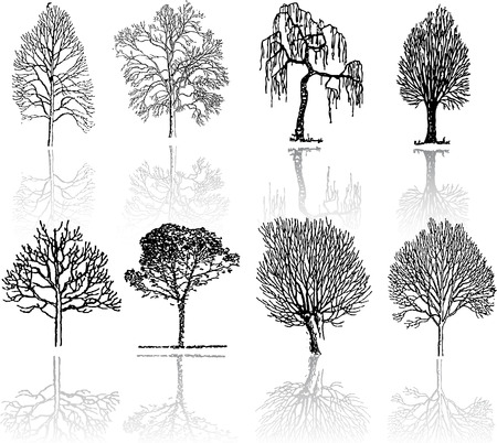 Tree  silhouettes  Stock Vector - 4522973