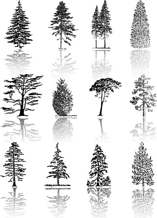 coniferous: Tree  silhouettes  Illustration