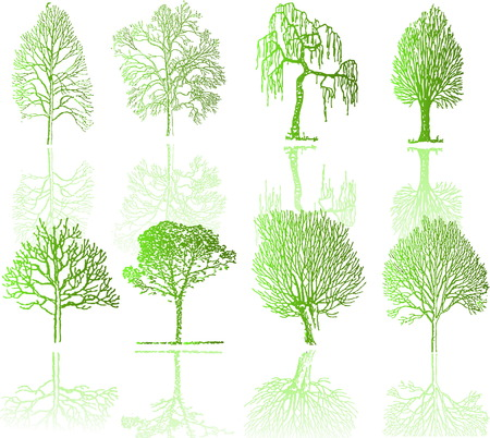 Tree  silhouettes  Stock Vector - 5022351