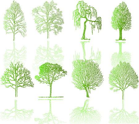 conifer: Tree  silhouettes  Illustration
