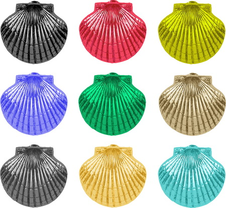 sea creatures: collection of nine colorful sea shell