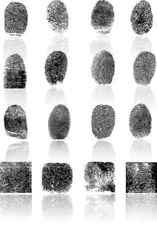 individualit�: Impronte digitali Vettoriali
