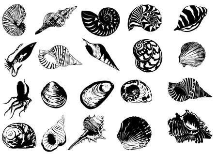 almeja: Ilustraci�n vectorial de conchas marinas diferentes  Vectores