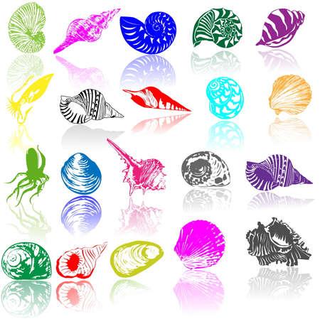 cozza: Illustrazione vettoriale di conchiglie marine differenti  Vettoriali