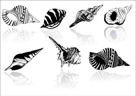 mejillones: Ilustraci�n vectorial de conchas marinas diferentes  Vectores
