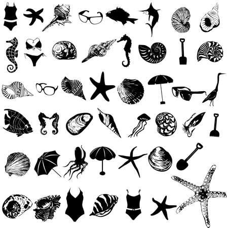 marine bird: Ilustraci�n vectorial de elemento de mar Vectores