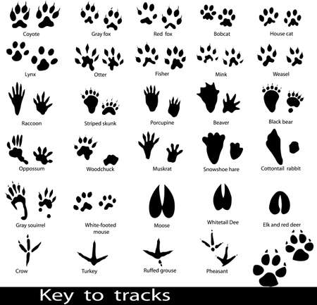black toes: Collection of animal and bird trails with name  Illustration