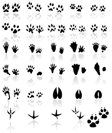 huellas de animales: Colecci�n de pistas de animales y aves